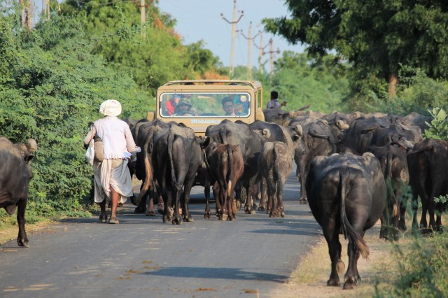 Pukka road, Gujarat village