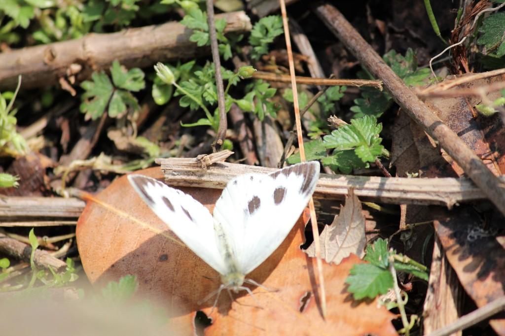 ornithologist, lepidopterist