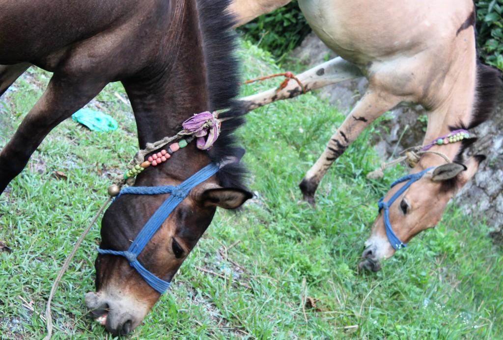 green, grass, horse
