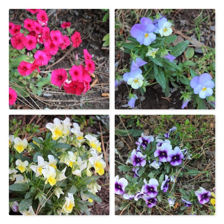 Naveen's Glen, garden, bloom