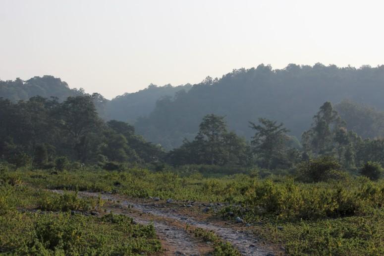 enthrall, landscape, tiger, lap of nature