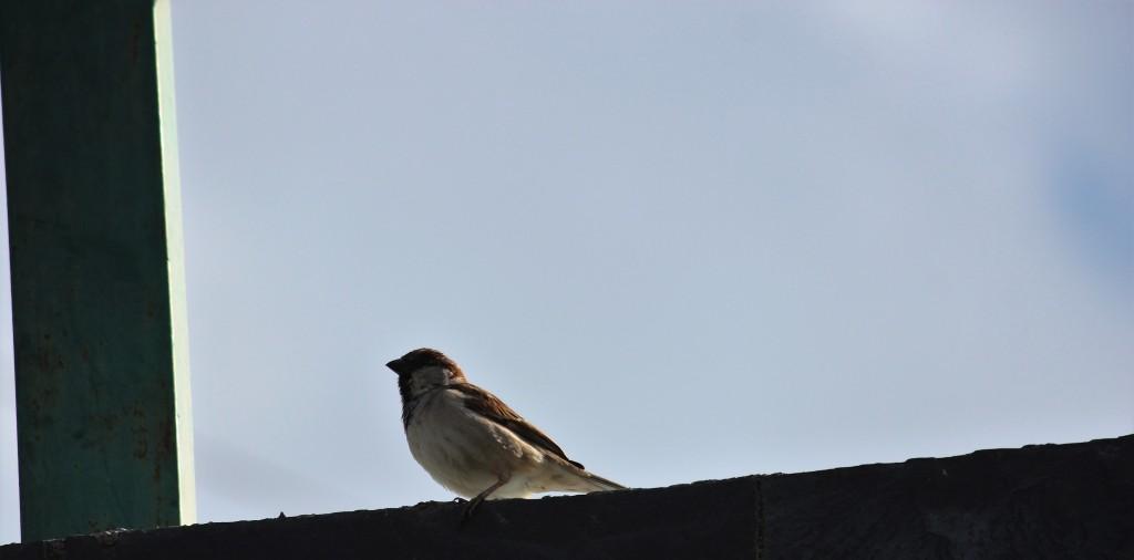 sparrow, nest, birdhouse, food, chick