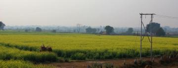 Mustard fields, Eternal favorite, uttar pradesh, india