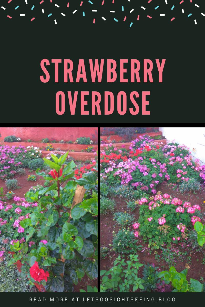Strawberry Overdose
